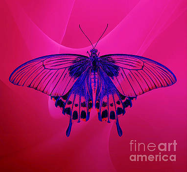 A Beautiful Butterfly by Clive Littin