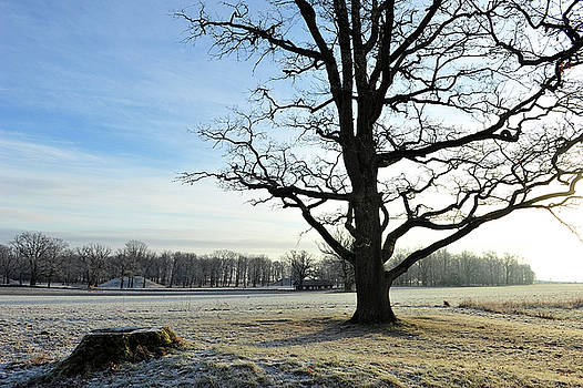 A Beautiful Day in Viking Land by Randi Grace Nilsberg