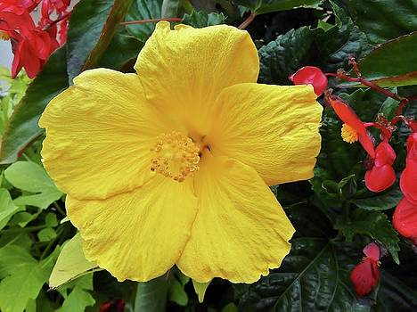A Beautiful Flower by Vickie G Buccini