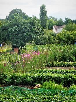 Cathy MONNIER - A beautiful garden