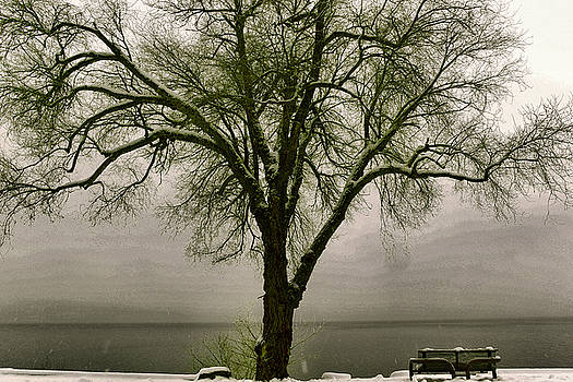 A bench and tree in the snow by Jeff Swan
