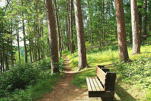 A Bench in the Woods by Bethany Benike