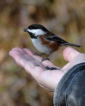 Bill Kellett - A Bird in the Hand