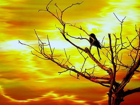 A bird watching the sun set by Laxmikant Chaware