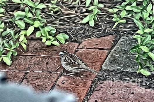 A birds life by Robin Coaker