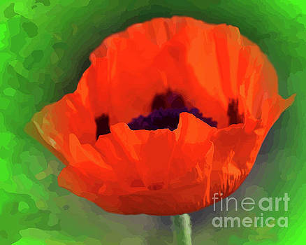A Blessed Red Poppy by Clive Littin
