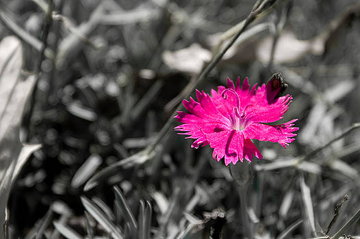 A Bloom of Color by Bob Mintie