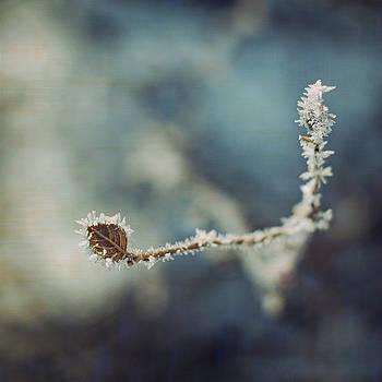 A blue day by AugenWerk Susann Serfezi