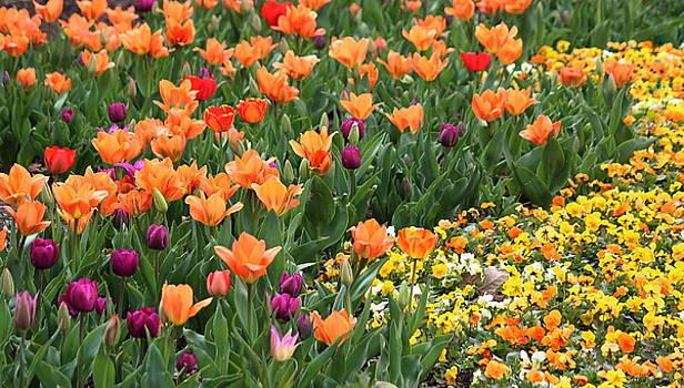 Rosanne Jordan - A Burst of Spring Color