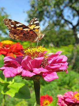 A Butterfly on the Pink Zinnia by Ausra Huntington nee Paulauskaite