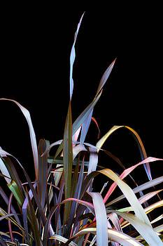 Donna Blackhall - A Captured Rainbow