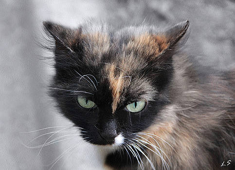 A cat with a stern look by Sergey Lukashin