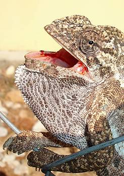 Tracey Harrington-Simpson - A Chameleon With Open Mouth