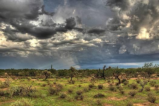 A Cloudy Desert by Kimmi Craig