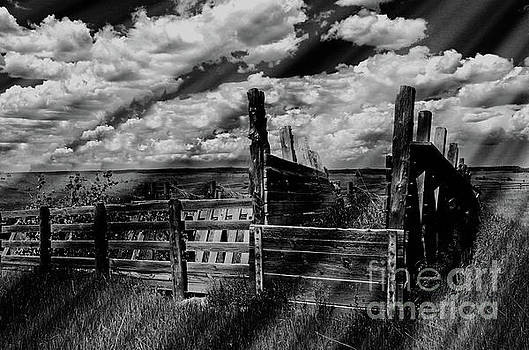 A Colorado Landscape in Black And White  by Liane Wright