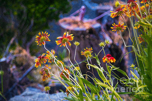Omaste Witkowski - Colorful Imaginations Methow Valley Flowers by Omashte