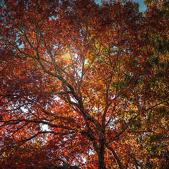 A colorful tree in Autumn by Natalie Rotman Cote