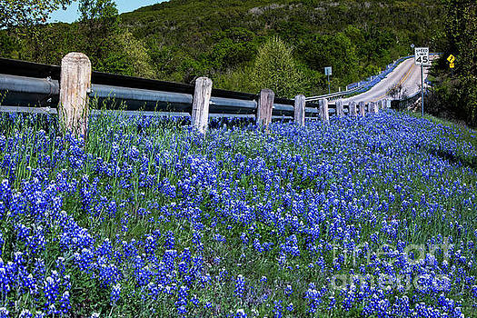 Herronstock Prints - A country highway leads through a color field of Texas bluebonne