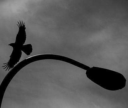 A Crow and a Streetlight by Trance Blackman