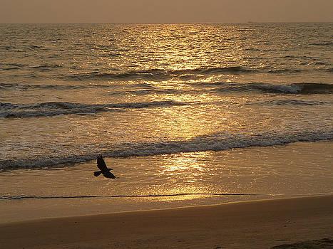 A Crow at Sunset by Sandeep Gangadharan