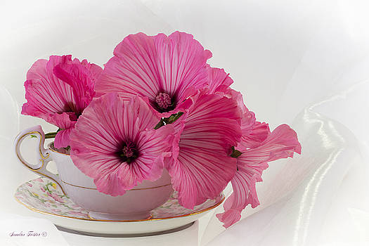 Sandra Foster - A Cup Of Pink Lavatera Flowers