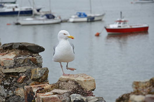 A Dancing Seagull by Fred Whalley