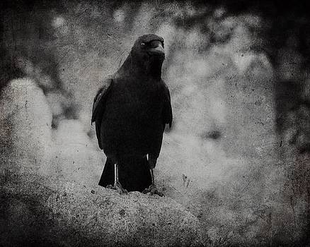 Gothicrow Images - A Dark Crow In Black And White