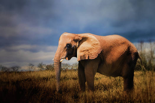 Jai Johnson - A Day In Nature Elephant Art