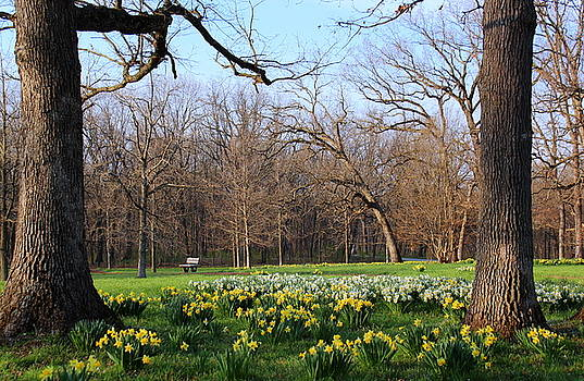 Rosanne Jordan - A Day With Daffodils