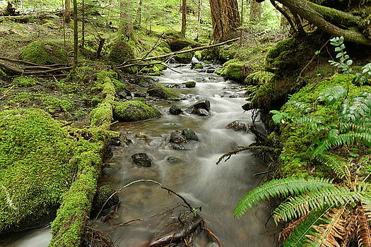 A deep forest stream by Jeff Swan