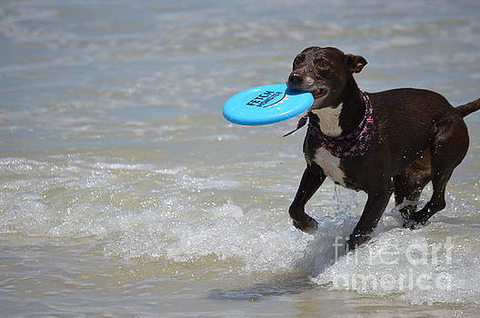 A dog and her frisbee by Brigitte Emme