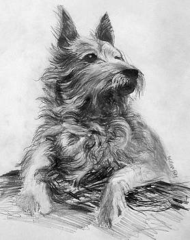 A Dog by William Hay