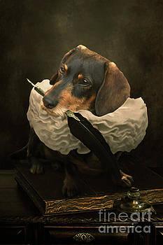 A Dogs Tale by Babette Van den Berg