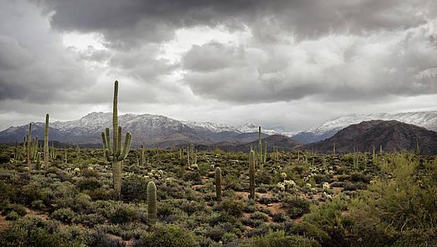 Saija Lehtonen - A Dusting of Desert Snow on the Mountain