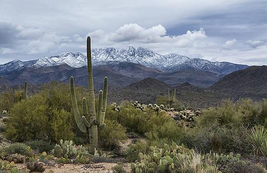 Saija Lehtonen - A Dusting of Snow in the Sonoran Desert