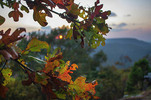 A Fall Sunset by Tammy Chesney