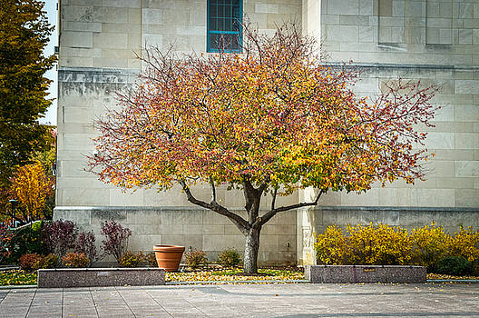 A Fall Tree by Andrew Kazmierski