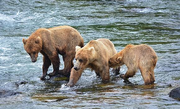 Patricia Twardzik - A Family of Bears in the River