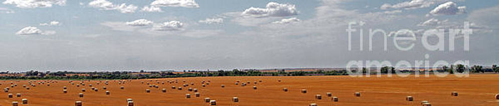 A Field Of Bales by Betty Morgan