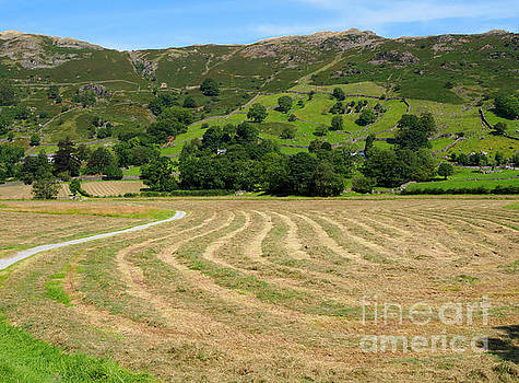 A field of freshly mown hay drying in Great Langdale by Louise Heusinkveld