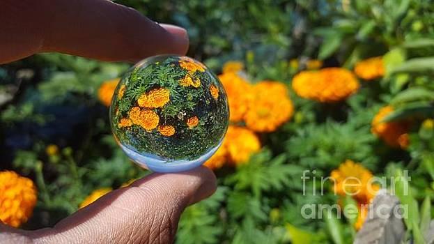 A fiels of orange by Ram Photography