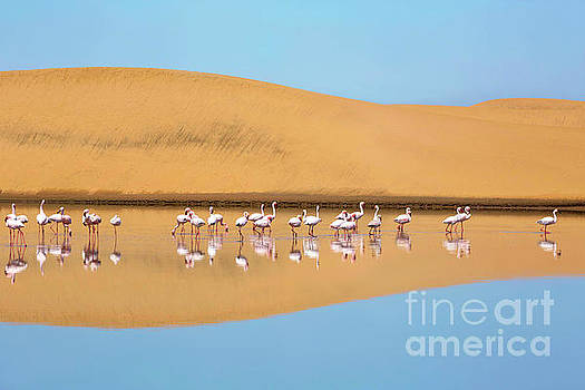 A flock of lesser flamingos in Walvis Bay, Namibia by Julia Hiebaum