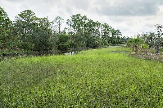 A Florida Fen by John M Bailey