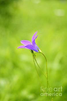 A flower by Studio Zoe