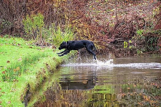 A Flying Leap by Susie Peek