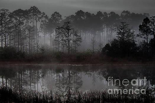 A foggy morning by David Lane