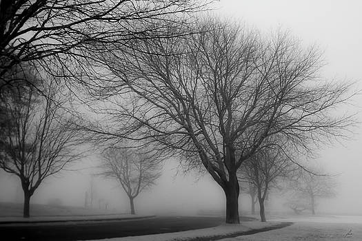 A Foggy Morning on Cape Cod by Patricia Turo