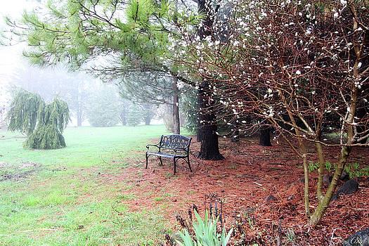 A Foggy Spring Morning by Trina Ansel