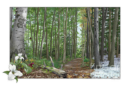 A forest in four seasons by Emily Damstra