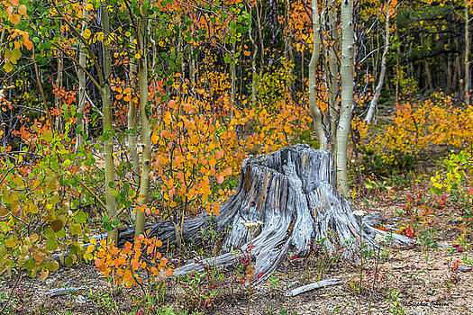 A Forest of Color by Stephen  Johnson